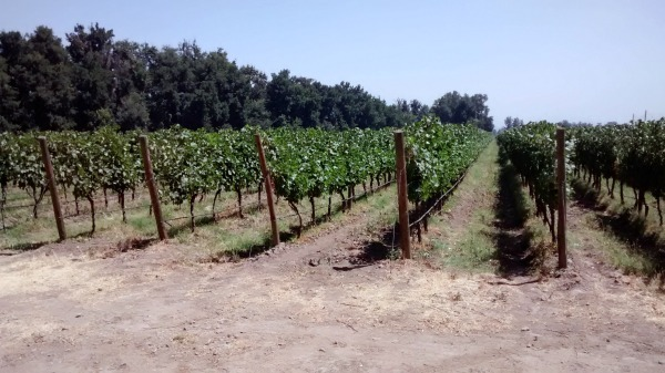 Vineyards in Chile--www.thethreeyearexperiment.com
