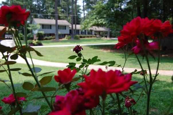 Our old neighborhood in Atlanta. www.thethreeyearexperiment.com
