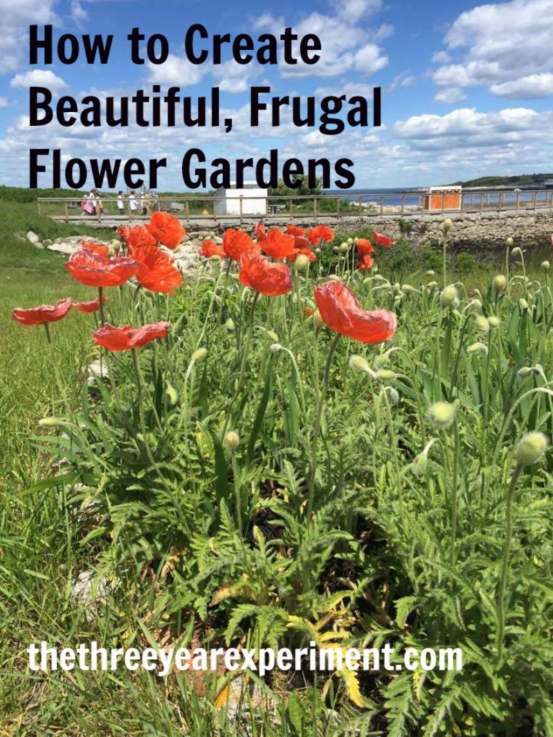 Flowers--www.thethreeyearexperiment.com