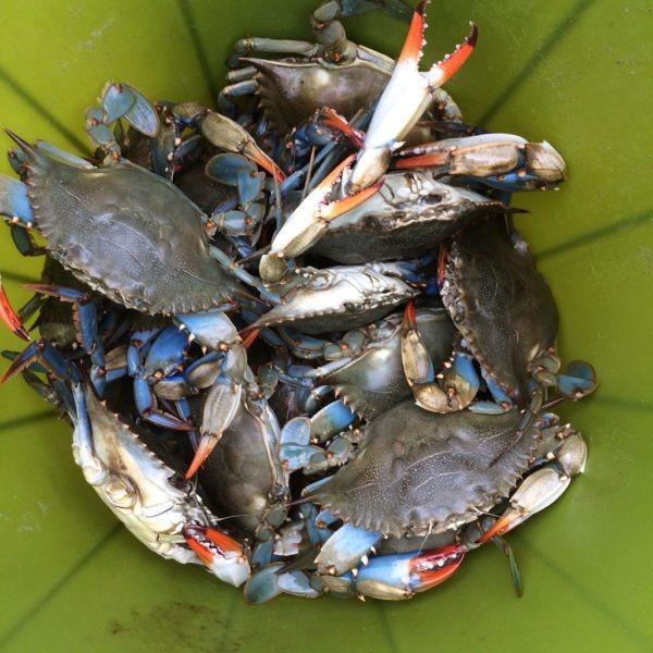 crabs in a pot--www.thethreeyearexperiment.com