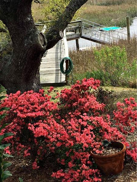 azaleas Charleston--www.thethreeyearexperiment.com