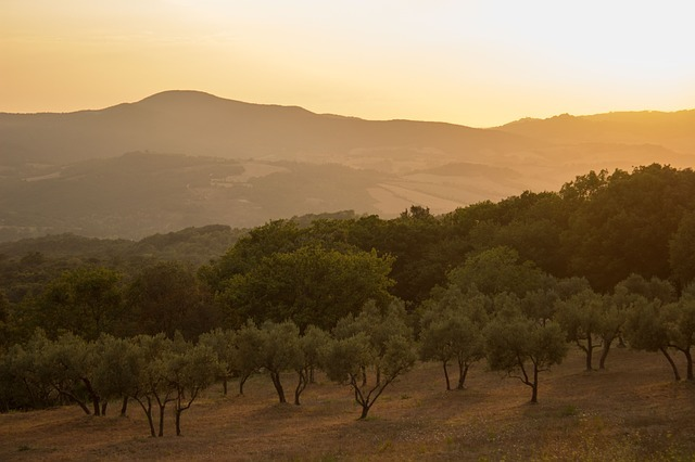 Olive grove--www.thethreeyearexperiment.com