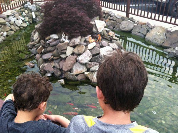 Koi pond--www.thethreeyearexperiment.com