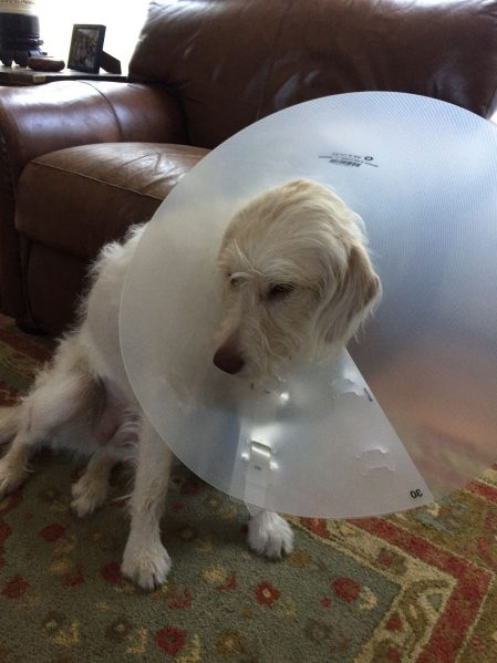 Dog cone March Net Worth Update www.thethreeyearexperiment.com