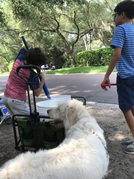 Lucy the dog Fourth of July Parade First Year Pet Expenses